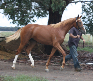 Rosewood_Park_Summer_Belle_E_4th_March_2012_(yearling)_(11).jpg
